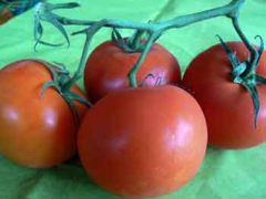 tomate_grappe